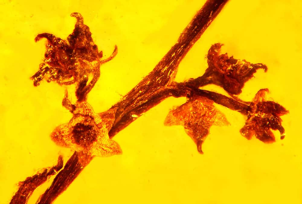 amber inclusions