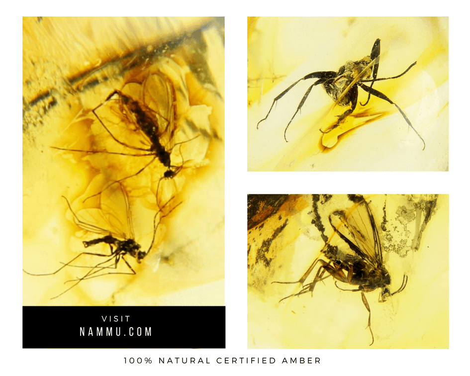 spiders in amber