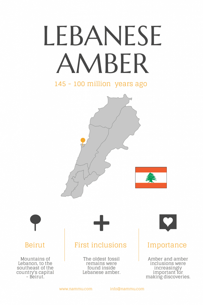how old is amber